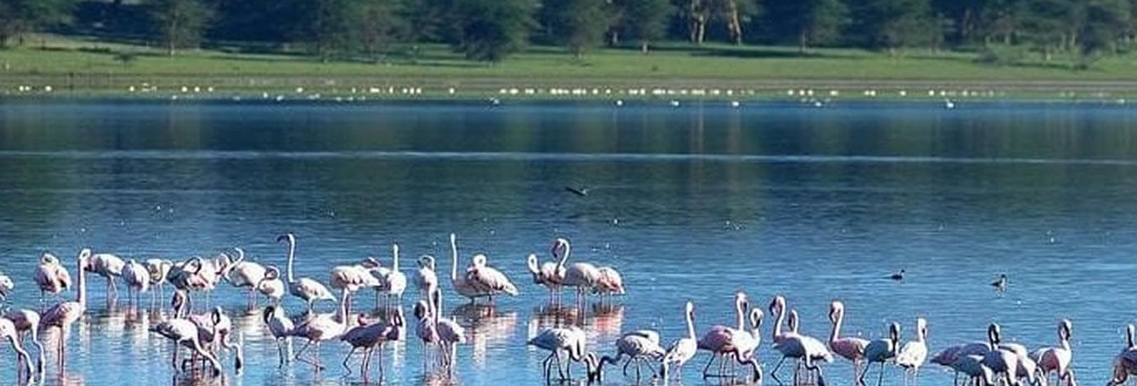 kenya safari_lake_naivasha