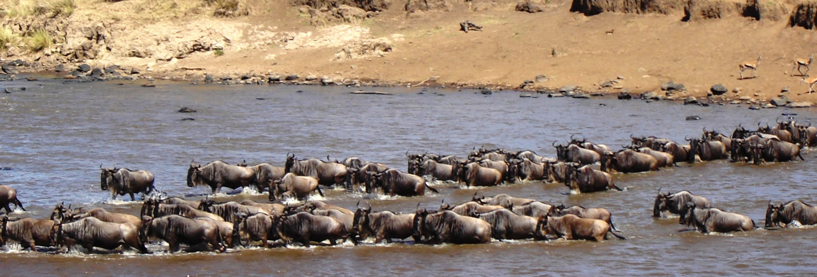 kenya_safari_masao_mara