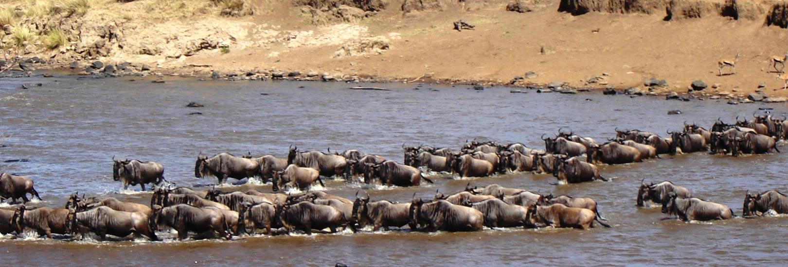 Rhino Safari – 9 Days